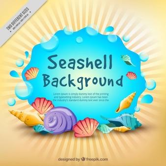 Fondo de conchas de playa de colores