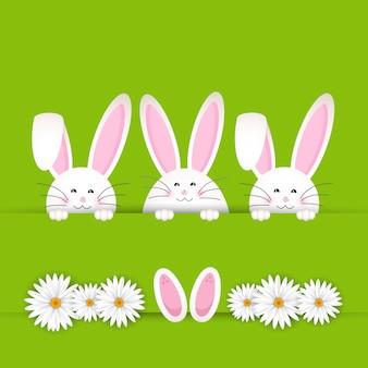 Fondo de conejo de pascua con margaritas