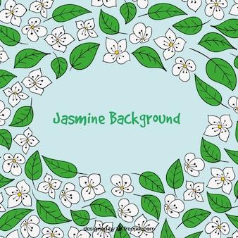 Fondo creativo de jazmín