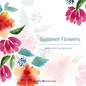 Fondo de flores de verano en acuarela