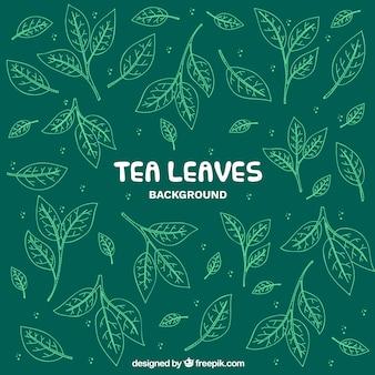 Fondo de hojas de té con estilo de dibujo a mano
