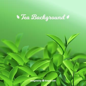 Fondo de hojas de té con estilo realista