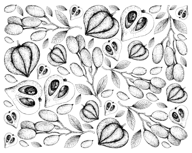 Fondo dibujado a mano de elaeocarpus hygrophilus y canistel o eggfruit