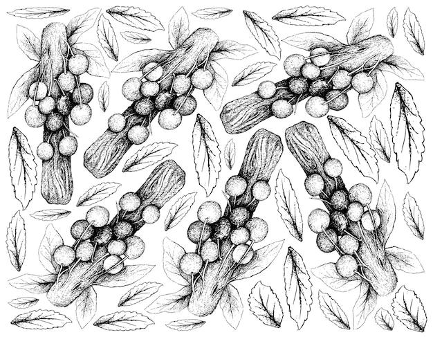 Fondo dibujado a mano de frutas de ciruela davidson
