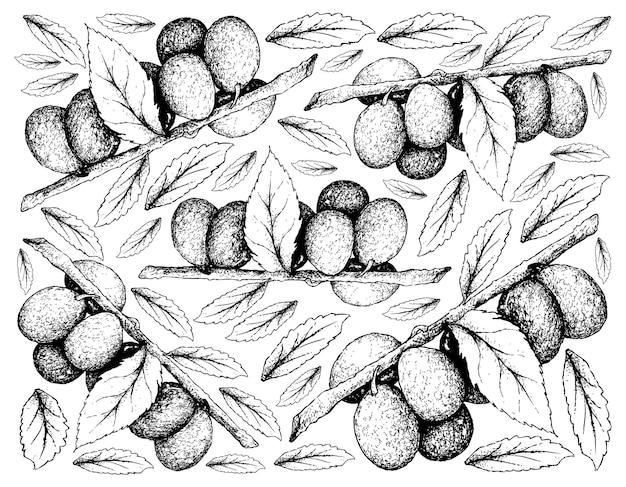 Fondo dibujado a mano de frutos de ciruela damson