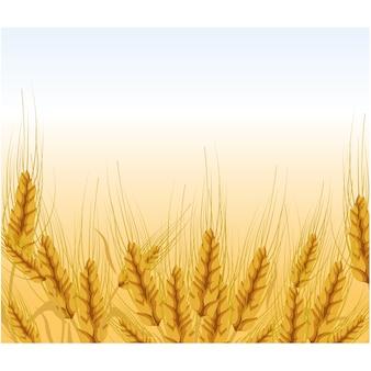 Fondo con diseño de trigo