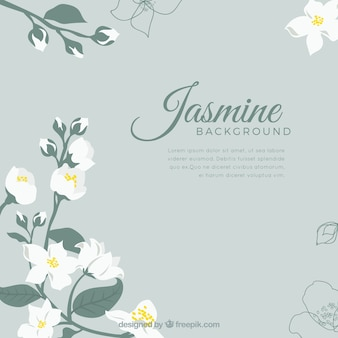 Fondo elegante de jazmín con diseño plano