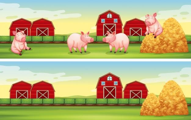 Fondo de escenas con cerdos en la granja.