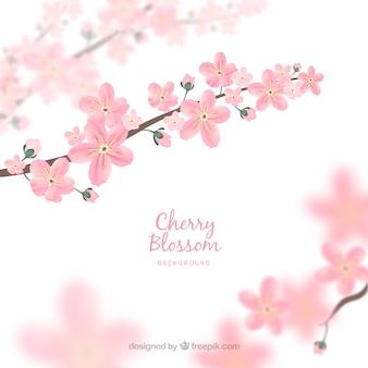 Fondo de flor de cerezo desenfocado