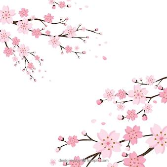 Fondo de flor de cerezo en estilo plano