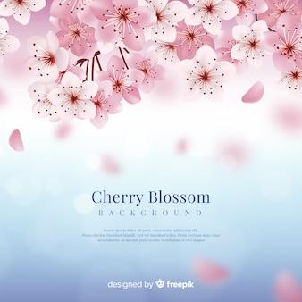 Fondo de flor de cerezo realista