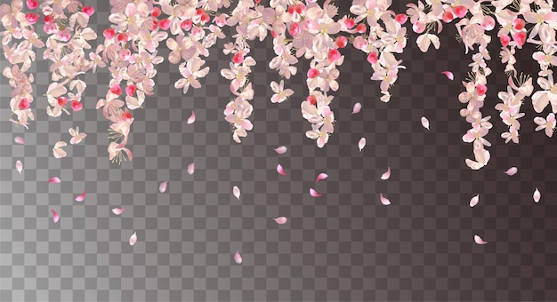 Fondo floral con flor de cerezo. flores colgantes rosas y pétalos cayendo