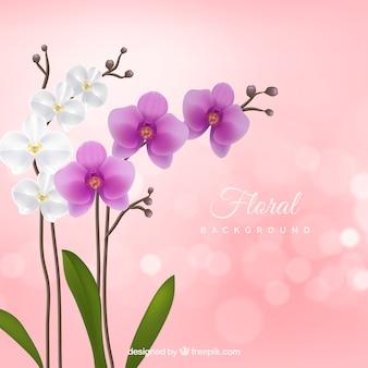 Fondo floral con orquídeas realistas