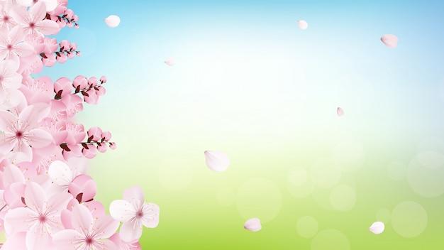 Fondo con flores de sakura rosa luz florecientes