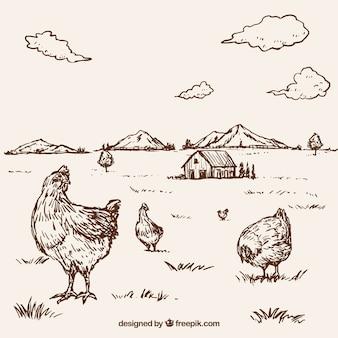 Fondo de gallinas dibujadas a mano en una granja