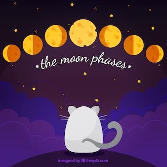 Fondo de gato con fases de la luna