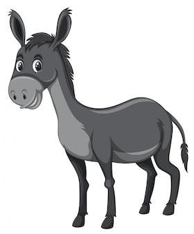 Fondo gris burro blanco