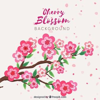 Fondo hermoso con flor de cerezo en diseño plano