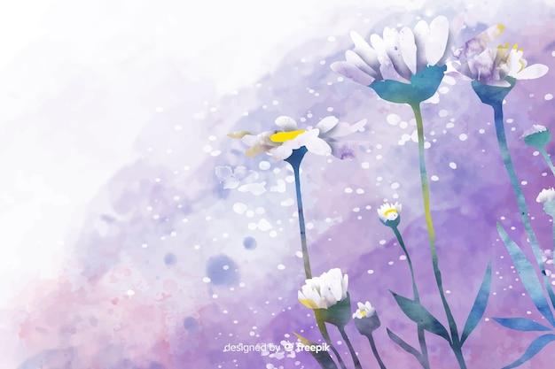 Fondo hermoso de la flor de la margarita de la acuarela