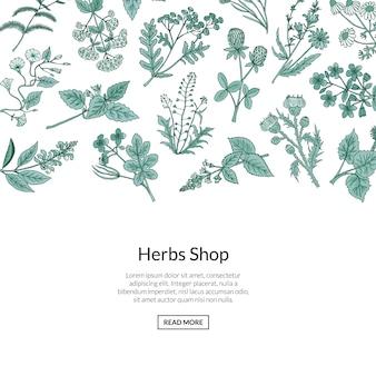 Fondo de hierbas medicinales dibujadas a mano con lugar para texto