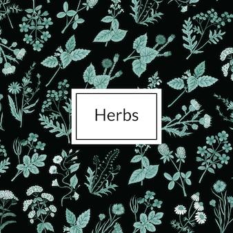 Fondo de hierbas medicinales dibujadas a mano
