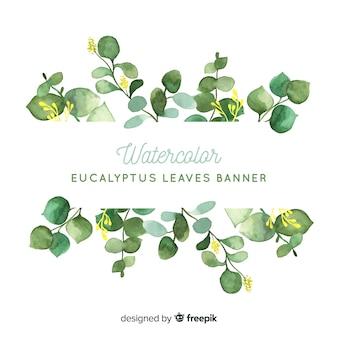 Fondo hojas eucalipto acuarela