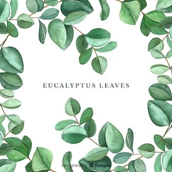Fondo hojas de eucalipto dibujadas a mano