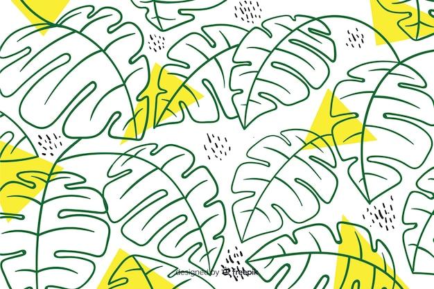 Fondo hojas de monstera sin color