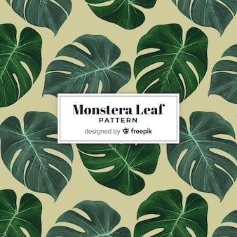 Fondo hojas de monstera dibujadas a mano
