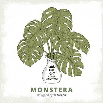 Fondo hojas de monstera en macetero