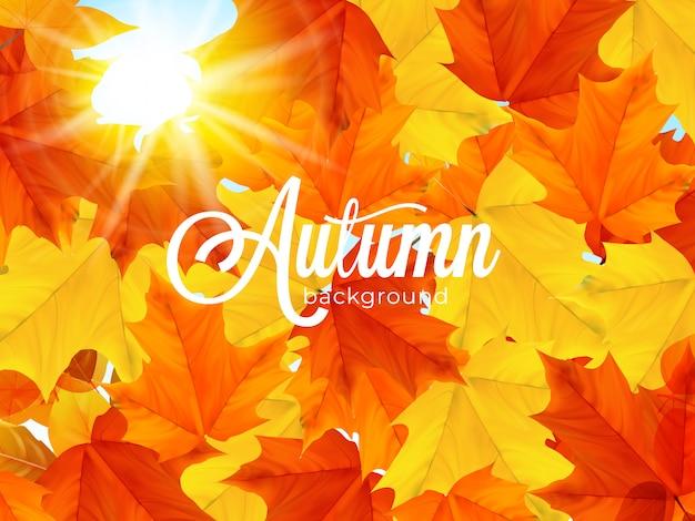 Fondo de hojas de otoño cálido iluminado por el sol