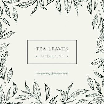 Fondo de hojas de té dibijado a mano