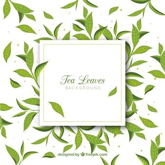 Fondo de hojas de té dibujado a mano