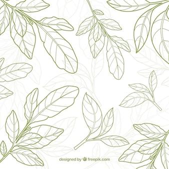 Fondo de hojas té  en estilo hecho a mano