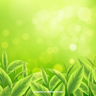 Fondo de hojas de té en estilo realista