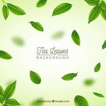 Fondo de hojas de té realista