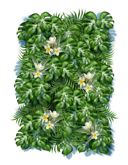 Fondo de hojas tropicales con flores de frangipani