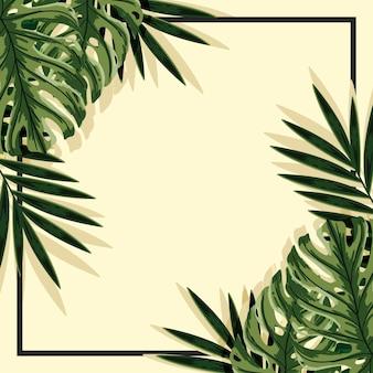 Fondo de hojas tropicales con marco