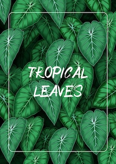 Fondo de hojas tropicales con plantas de la selva.