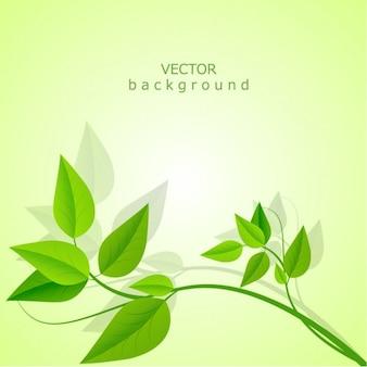 Fondo de hojas en vectores