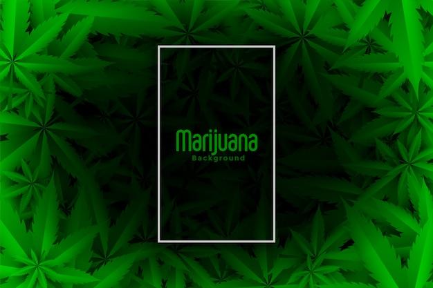 Fondo de hojas verdes de cannabis o marihuana