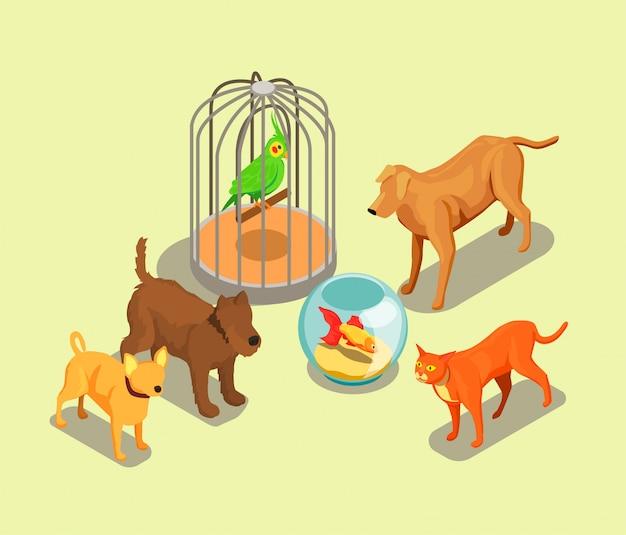 Fondo isométrico de la tienda de mascotas