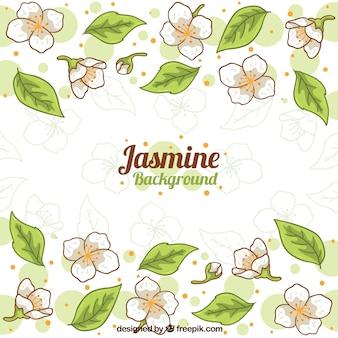 Fondo de jazmines dibujados a mano con hojas