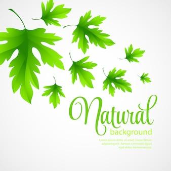 Fondo natural con hojas verdes de primavera