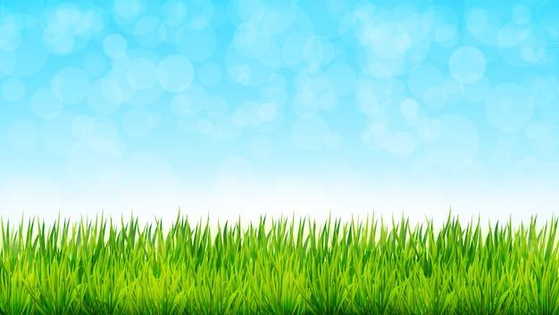 Fondo de naturaleza con hierba verde y cielo azul. ilustración