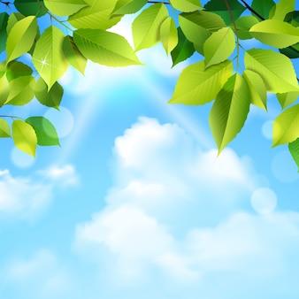 Fondo de nubes y hojas