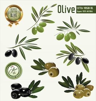 Fondo de oliva