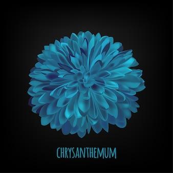 Fondo oscuro oscuro de la flor del crisantemo.