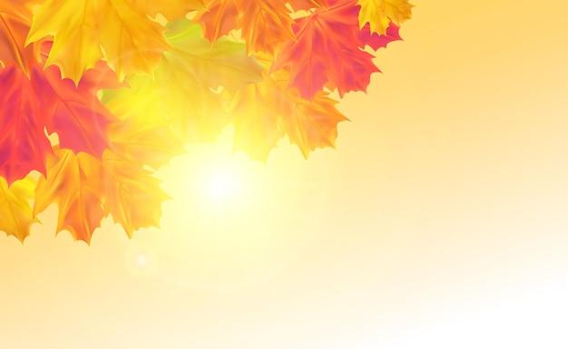 Fondo de otoño con hojas hojas de arce realista con luz solar para anuncio de banner de cartel