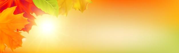Fondo de otoño con hojas hojas de arce realista con luz solar y cielo para banner de cartel